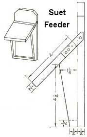 Build a Suet Feeder - Free Plans